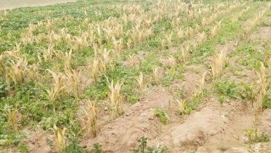 Photo of किसानों के पंजीकृत धान के रकबे और गिरदावरी में त्रुटि सुधार हेतु राजस्व सचिव ने जारी किए निर्देश