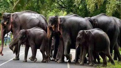 Photo of हाथी दल को भगाने गये वन कर्मियो व ग्रामीणो को घेरा हाथियो ने
