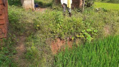 Photo of कम बरसात के बीच नरवा बना किसानों के लिए संजीवनी
